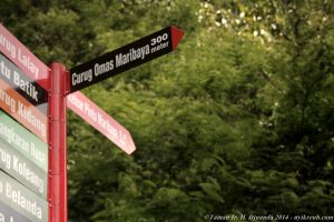 Menjelajahi Taman Hutan Raya Ir. H. Djuanda