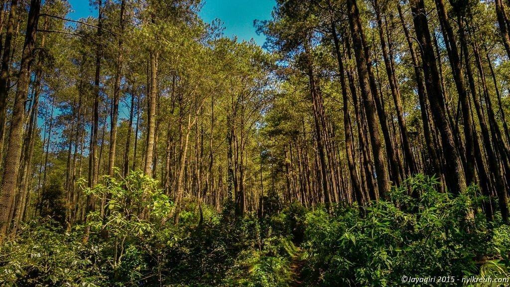 Pepohonan di sepanjang jalan menuju area camp di Gunung Jayagiri