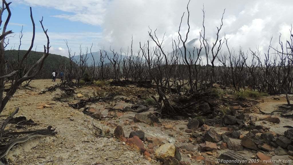 Hutan Mati, salah satu ciri khas dari Gunung Papandayan