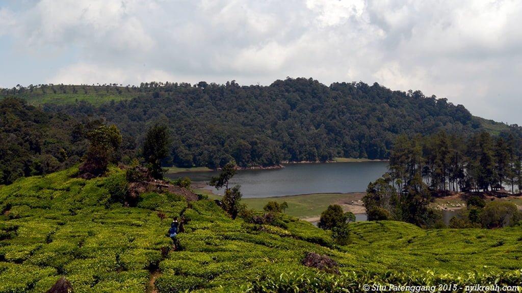 Kebun teh Situ Patenggang