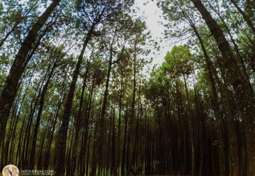 Hutan di Bukit Bintang