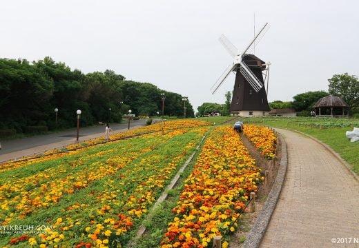 Taman di Osaka yang mirip banget sama di Belanda