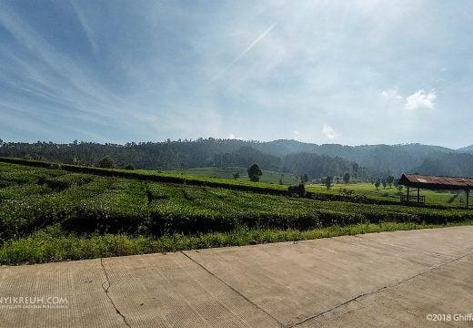 Pemandangan kebon teh di sepanjang perjalanan pulang