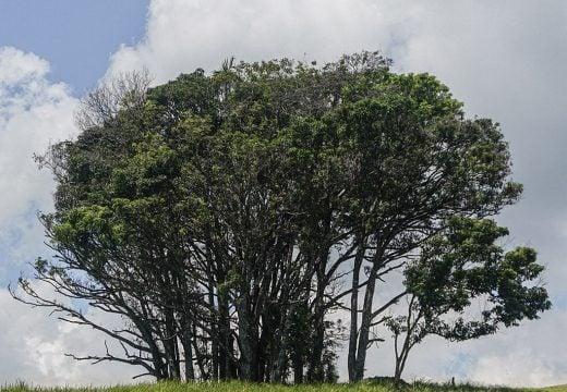 Pohon rindang di Bukit Babi