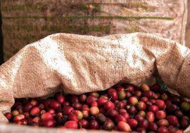Blue Korintji Coffee; Kopi dari Tanah Kerinci dengan Kekayaan Rasa dan Teknologi