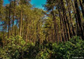 Camping Ceria di Puncak Gunung Jayagiri