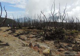 Mendaki Gunung Papandayan 2622 mdpl