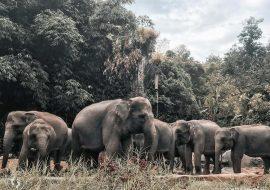 Taman Safari: Kembali Bertamasya di Era New Normal
