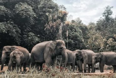 Taman Safari: Kembali Bertamasya di Era New Normal