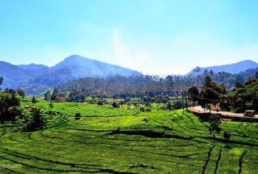 Objek Wisata Di Ciwidey Yang Wajib Dikunjungi