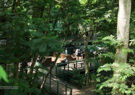 Jalan-Jalan Sehat Ke Hutan Kota BAKSIL (Babakan Siliwangi)