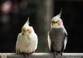 Ngasih Makan Burung di Bird & Bromelia Pavilion Bandung